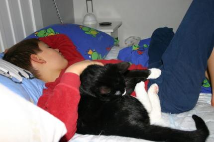 Så här kan man också sova som katt