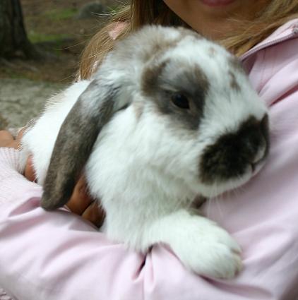 En brunvit kanin