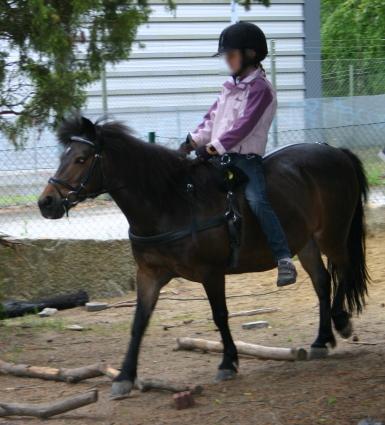 Trav med ponny