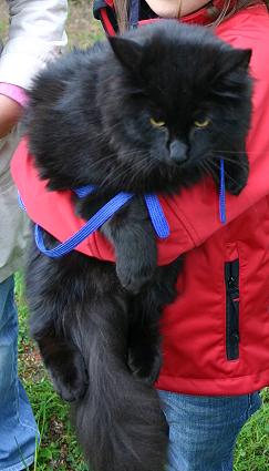 Och även en helsvart katt fanns med i bland kattskaran